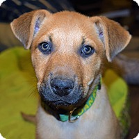 Adopt A Pet :: MAXWELL - Waterbury, CT