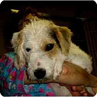 Adopt A Pet :: Mikey - Kingwood, TX