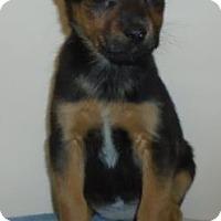 Adopt A Pet :: Muffin - Gary, IN