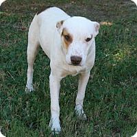 Adopt A Pet :: Otis - Lufkin, TX
