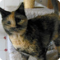 Adopt A Pet :: Calipsi - N. Berwick, ME