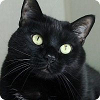 Adopt A Pet :: Zeke - Chicago, IL