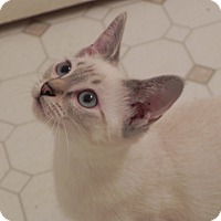 Adopt A Pet :: Ami - Fayetteville, TN