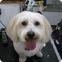 Adopt A Pet :: Tuffy - Salem, OR