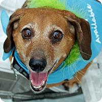 Adopt A Pet :: Duke - Harmony, Glocester, RI