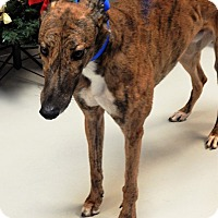 Adopt A Pet :: Joe Fast Man - Florence, KY