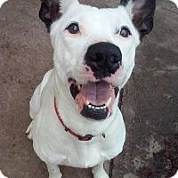 Adopt A Pet :: Poppy - Los Banos, CA