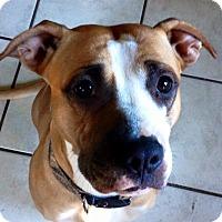 Adopt A Pet :: CARLIE - Coudersport, PA