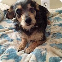 Adopt A Pet :: Willie - Rancho Cucamonga, CA