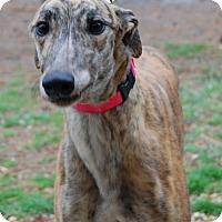 Adopt A Pet :: Good Ideal 'Ida' - Cherry Hill, NJ