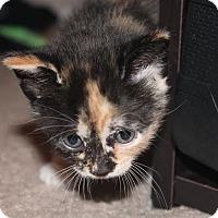 Adopt A Pet :: Poppy - Wilmington, NC