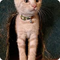 Adopt A Pet :: Brewzer - Warren, OH