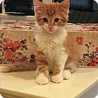 Adopt A Pet :: Jagger - Scottsdale, AZ