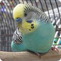 Adopt A Pet :: Alexander - Elizabeth, CO