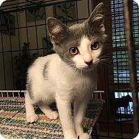 Adopt A Pet :: Violet - Simpsonville, SC