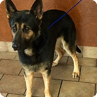 Adopt A Pet :: Vader - Oswego, IL