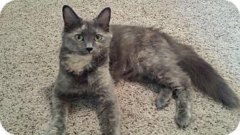 Calico Cat for adoption in Cedar Springs, Michigan - Ezmerelda