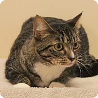 Adopt A Pet :: Addy - Bellingham, WA