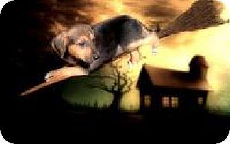 Shepherd (Unknown Type) Mix Puppy for adoption in McKinney, Texas - Oliver