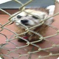Adopt A Pet :: TRAN - Waynesville, NC