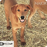 Adopt A Pet :: Major - DeForest, WI