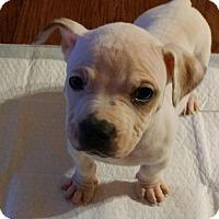 Adopt A Pet :: Kylo - Tucson, AZ