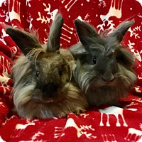 Adopt A Pet :: Truffle & Peaches - Watauga, TX
