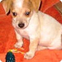 Adopt A Pet :: Christian - Phoenix, AZ