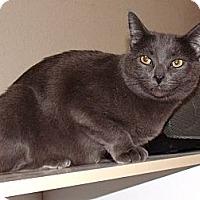 Adopt A Pet :: GG - Tabitha - Scottsdale, AZ