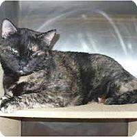 Adopt A Pet :: Esperanza-Pending - Colmar, PA