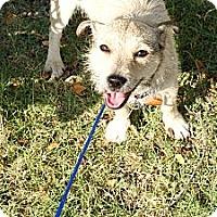 Adopt A Pet :: Hobo - Pocahontas, AR