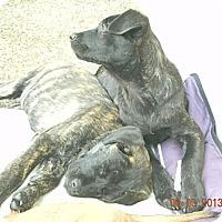 Adopt A Pet :: Fancy&Sisters - San Ysidro, CA