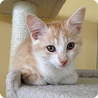 Adopt A Pet :: Jelly Bean - Island Park, NY