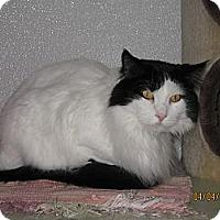 Adopt A Pet :: Oreo - Colorado Springs, CO