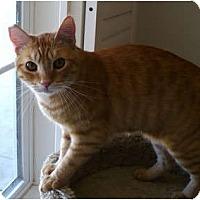 Adopt A Pet :: Oddie - Palmdale, CA