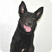 Adopt A Pet :: Elsie - Port Washington, NY