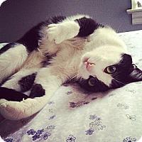 Adopt A Pet :: Jordan - Springfield, PA