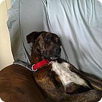 Adopt A Pet :: Bruno - Plainfield, IL