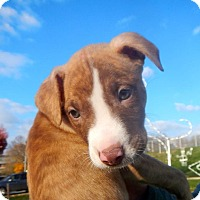 Adopt A Pet :: Jake - Reisterstown, MD