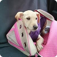 Adopt A Pet :: Candi - Silsbee, TX