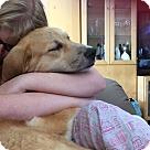 Adopt A Pet :: RHIANNON