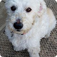 Adopt A Pet :: Kellan - Santa Rosa, CA