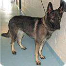 Adopt A Pet :: Ginger 4228