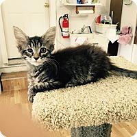 Adopt A Pet :: Axel - Speonk, NY