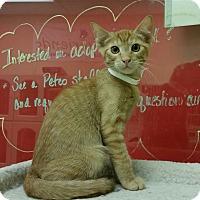 Adopt A Pet :: Eeyore - Phoenix, AZ