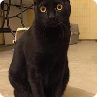 Adopt A Pet :: Sam - Sacramento, CA