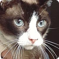 Adopt A Pet :: Edgar - Homewood, AL