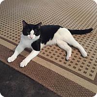 Adopt A Pet :: Maximus (meet me 5/27) - Manchester, CT