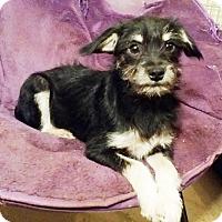 Adopt A Pet :: Tobi - Lawrenceville, GA