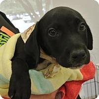 Adopt A Pet :: Blue Boy - Austin, TX